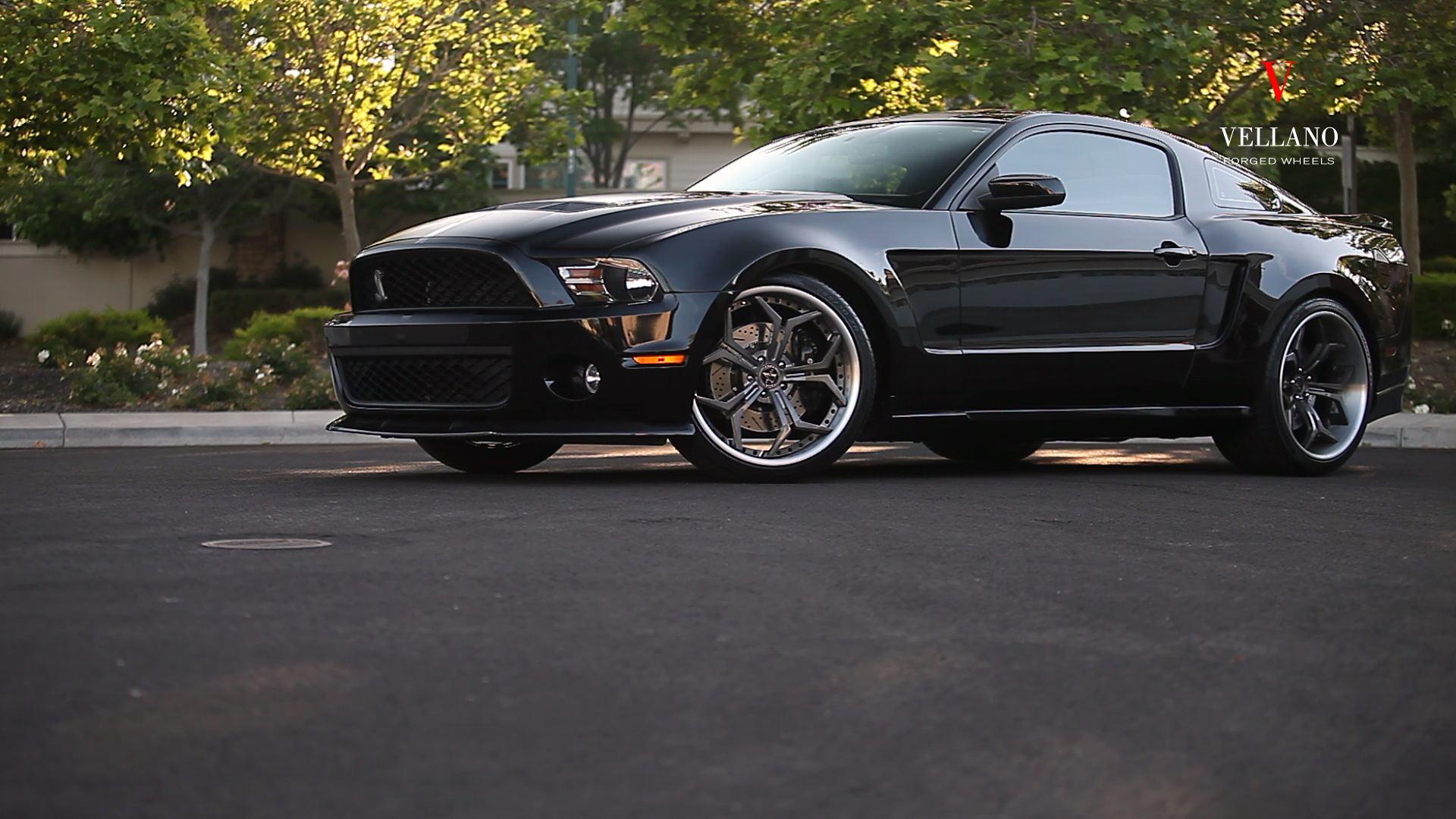 MUSTANG SNAKE ON VCX CONCAVE